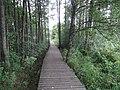 Gmina Krasnopol, Poland - panoramio (3).jpg