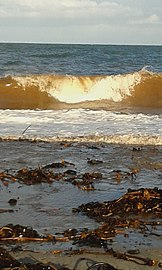 Golden waves 01.jpg