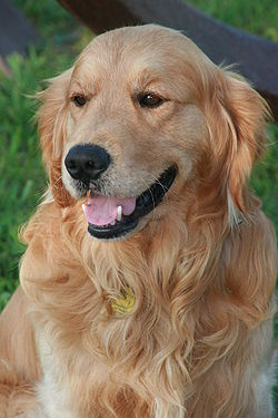 Image Result For A Dog Hair