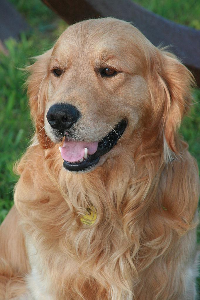 Homeward Bound Dog Rescue Woodinville Wa