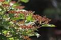 "Gradina Botanica ""Vasile Fati"" (4654003590).jpg"