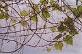 Grapevines 20020400 3.jpg