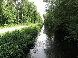 Great Dismal Swamp National Wildlife Refuge - Washington Ditch in the Great Dismal Swamp National Wildlife Refuge in 2016