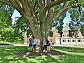 Great Elm with Visitors at Phillips Academy, Andover, MA - May 2020.jpg