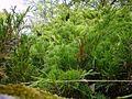 Green bush.jpg