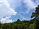 Green forest blues sky and the clouds.jpg
