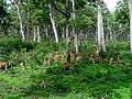 Group of deer.jpg