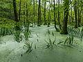 Grumsiner Forst bei Luisenfelde.jpg