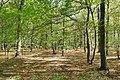 Hambacher Forst bei Morschenich DE 2018-09-09 E.jpg