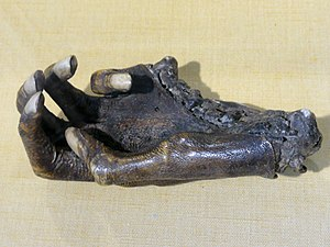 Robert Mansell - Hand of Sir John Heydon (1588 – 1653), cut off in a duel with Sir Robert Mansel in January 1600. Norwich Castle Museum.