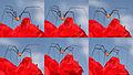 Harvestman opilio canestrinii male 6.jpg