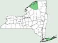 Hieracium sabaudum NY-dist-map.png