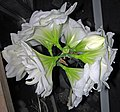 Hippeastrum sp. (amaryllis) 4 (32330850510).jpg
