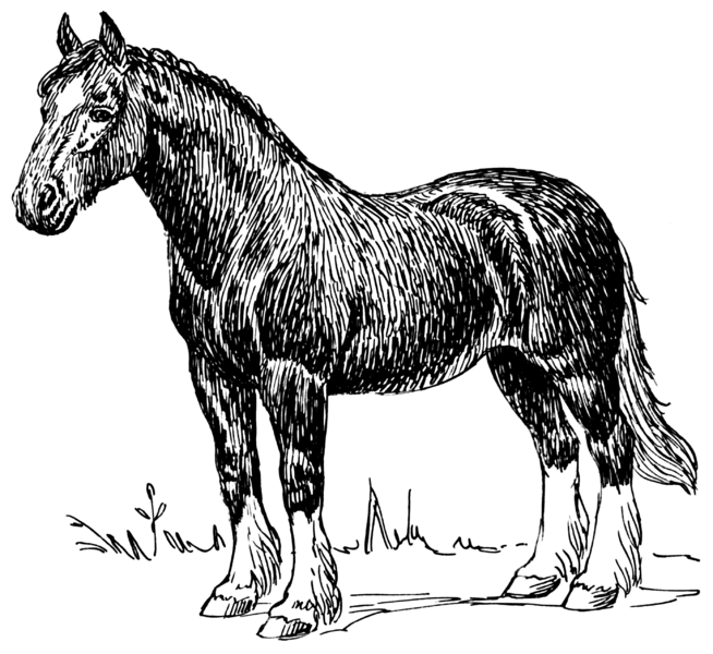 File:Horse (PSF).png