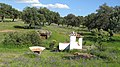 Horta da Coitadinha - panoramio.jpg
