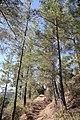 Horteri Nature Trail - panoramio (13).jpg