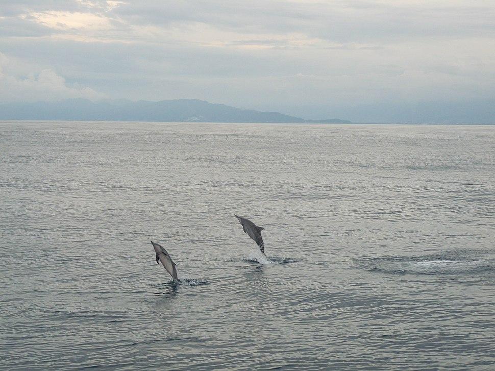 Hualien - panoramio (4)