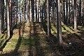 Huegelgrab an der Heidemühle.jpg
