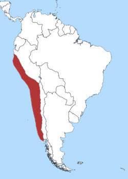 Humboldt Penguin.png