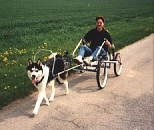 Sacco-Cart