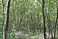 Huntloser Moor.jpg