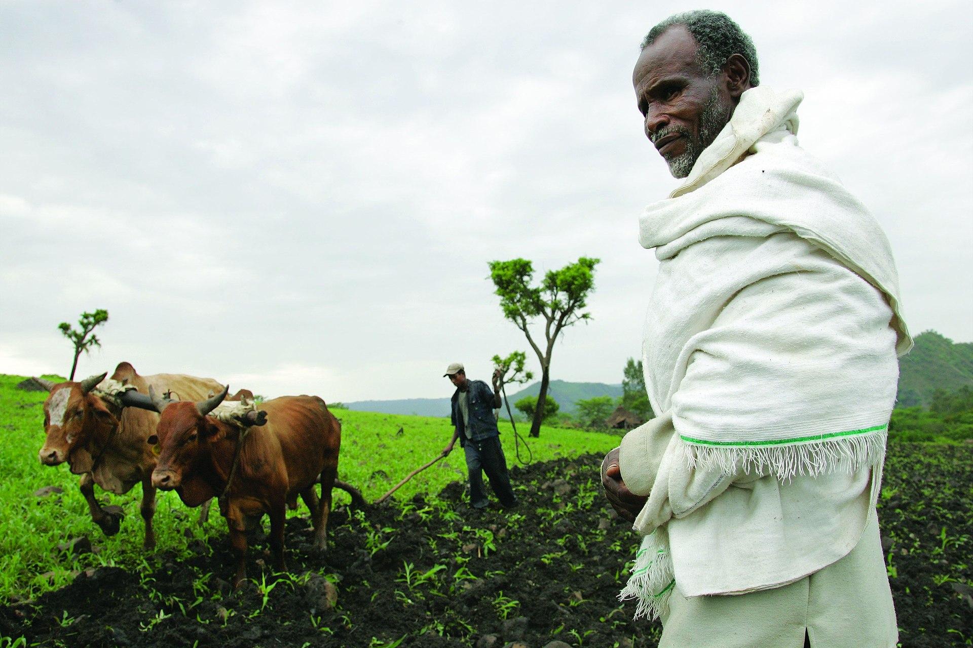 Agriculture In Ethiopia Wikipedia