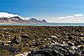 Iceland. Shoreline in Budir (7164838197).jpg