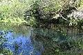 Ichetucknee River 8.jpg