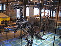 Iguanodon3 28-12-2007 14-20-18.jpg