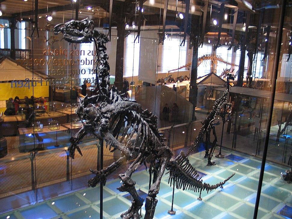 Iguanodon3 28-12-2007 14-20-18