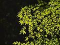 In Japanese garden, Portland (4333295416).jpg