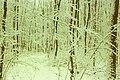 In the forest Durlesti (1996). (32174432900).jpg