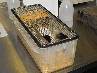 Chov myší v labortóriu
