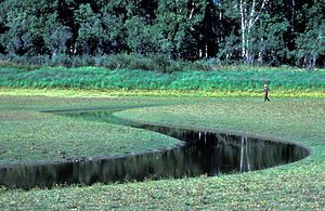Innoko National Wildlife Refuge - Image: Innoko Refuge Wetlands