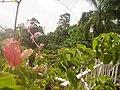 Jamaica - panoramio (16).jpg