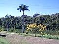 Jardim Santo Antônio, Goiânia - GO, Brazil - panoramio (2).jpg