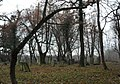 Jastrowie, cmentarz żydowski ,2 poł.XVIII.JPG