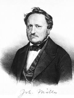 Johannes Peter Müller German zoologist