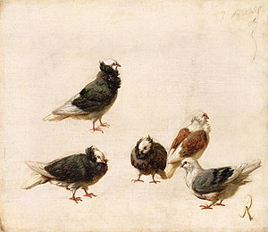 José Ruiz y Blasco - A group of doves painted by José Ruiz y Blasco