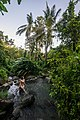Jungle Paradise - Flickr - Tiomax80.jpg