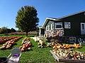 Kalscheur Pumpkin Patch - panoramio.jpg