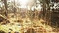 Kampina Gras in zonlicht winter 2010 - panoramio.jpg