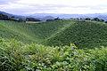 Kannabeyama01s3200.jpg