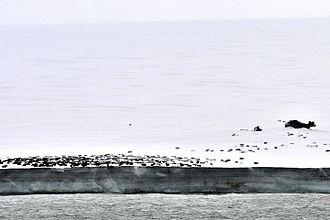 Komsomolets Island - Image: Kap Arktitscheski 1 2014 08 31