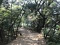 Kasuya Research Forest of Kyushu University 9.jpg