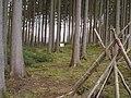 Keltenschanze bei Möckenlohe - panoramio.jpg