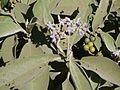 Kerosene Plant (6364969513).jpg