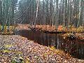 Kiljatu oja Jõe(Püti) juures 2014-11-03 14.02.10 - panoramio.jpg