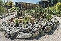 Klagenfurt Botanischer Garten Sukkulente der Neuen Welt 21062016 2803.jpg