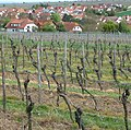 Kleinkarlbach und seine Weinberge - panoramio.jpg